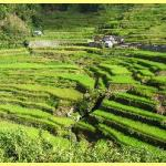 The amazing rice terraces a world heritage site