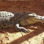 Animali Australia