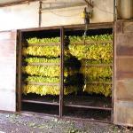 Mc Lees Tobacco's Farm - i KILNS