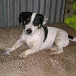 Joe and Peter Tobacco's Farm - Bandy the falafel dog