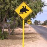 Australian outback sheep station