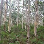 Timber forest