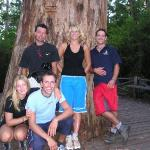 the famous Gloucester tree