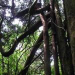 6° GIORNO Murchison - Okarito