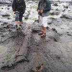 11° GIORNO Curio Bay (The Catlins) - Balclutha