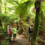 Malt Rest (Otway Park) - Rainforest walk